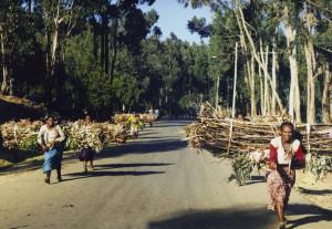 Ethiopian women carrying wood