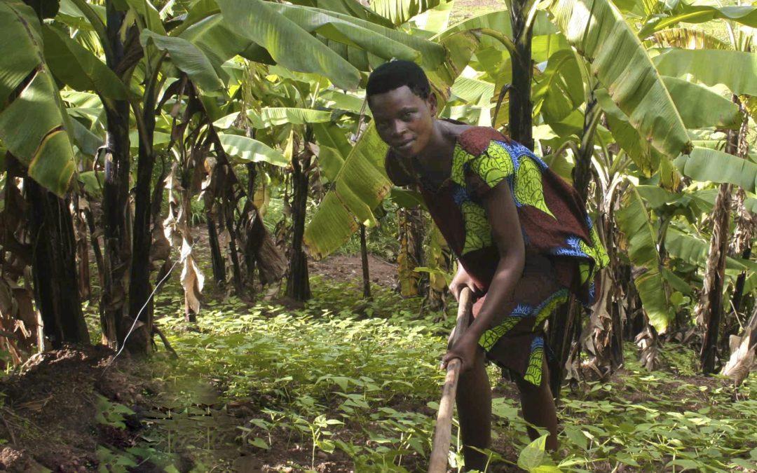 Creating Coffee Lifeline Livelihoods